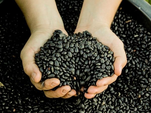 Qual a semente que você planta no mundo?